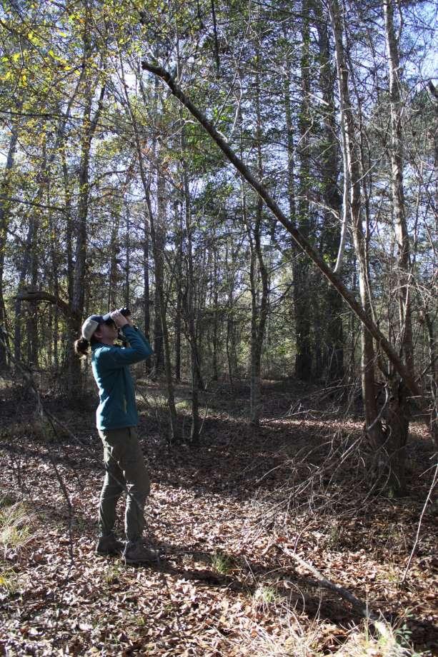 Visit the Big Thicket, Village Creek TX, bird watching Texas,