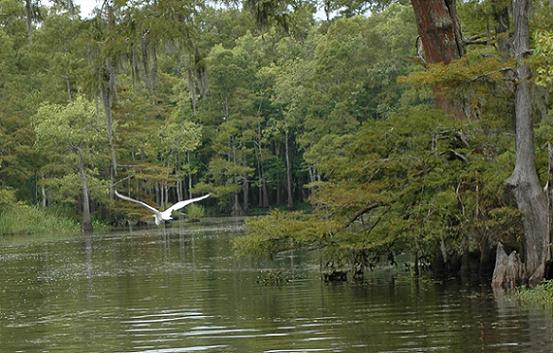 Visit the Big Thicket, Village Creek TX, bird watching Texas,