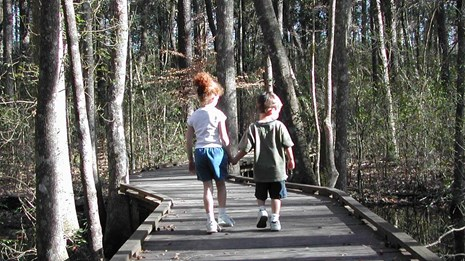 Village Creek Hiking, Bird Watching Big Thicket, East Texas Canoe Trails,