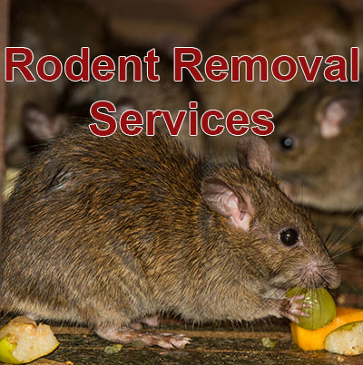 snake removal Beaumont, bat removal Port Arthur, raccoon removal Orange TX, pest control company Beaumont,