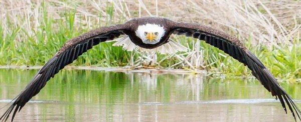 bird watching SETX, ornithology Southeast Texas, bald eagles Big Thicket, activities East Texas, calendar Southeast Texas