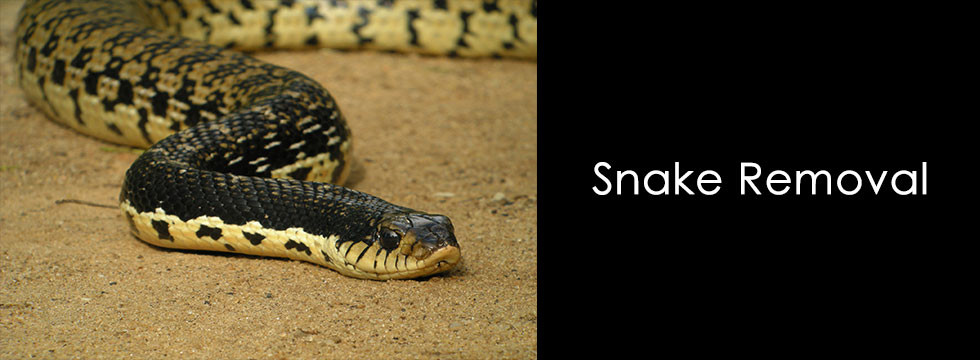 snake removal Beaumont, pest control Port Arthur, pest control Vidor, pest removal Lumberton TX,