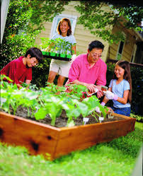 garden East Texas, garden Beaumont, garden SETX, Golden Triangle gardening, vegetable garden Beaumont,