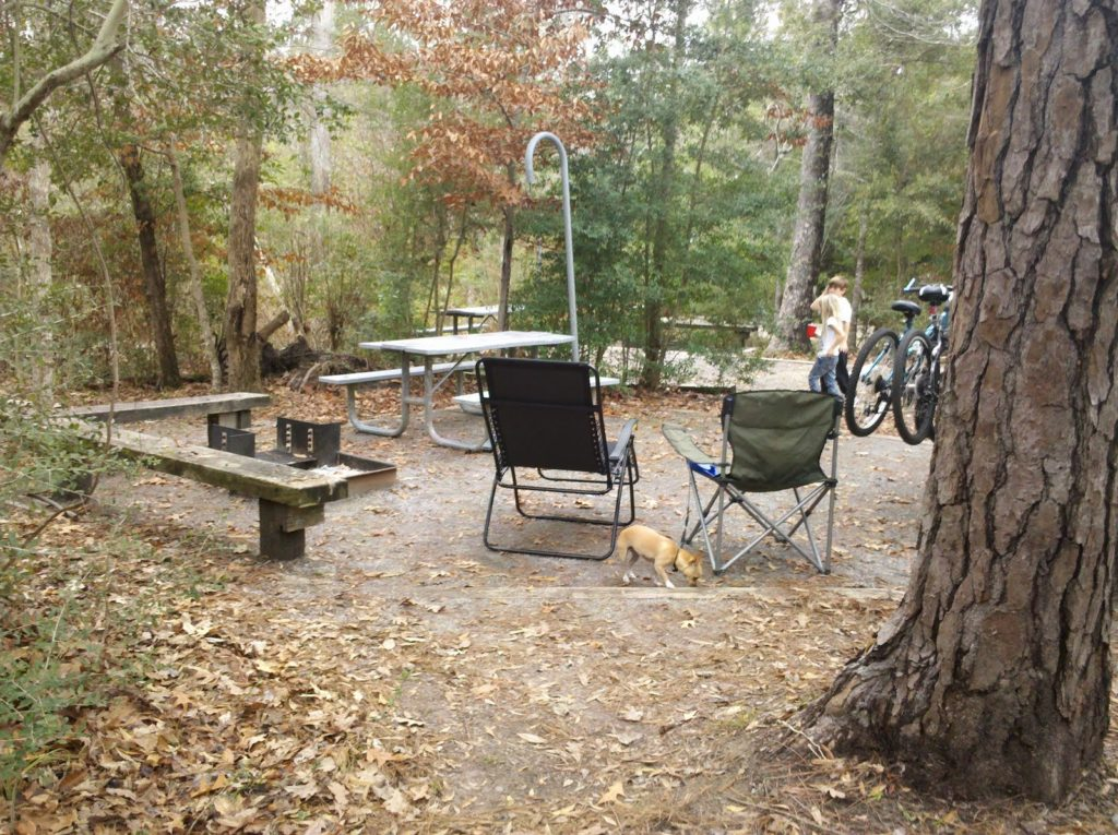 Village Creek State Park Guide, to do Beaumont, East Texas road trips, canoe Village Creek, kayak Big Thicket, camping SETX,