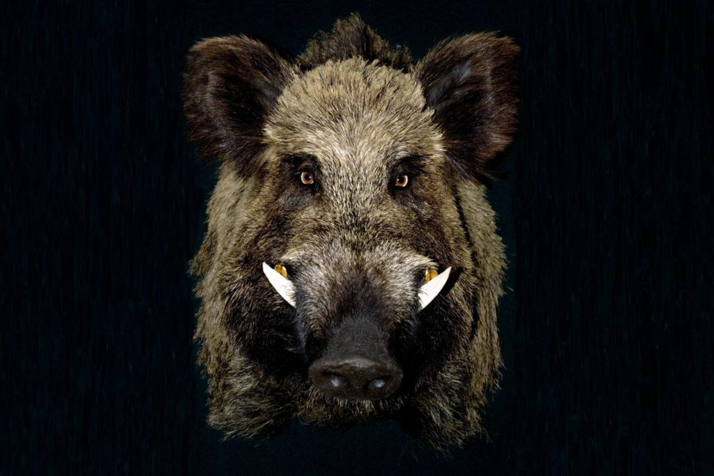 hunting Beaumont, hunting Big Thicket, hunting East Texas, hunting Sam Rayburn,